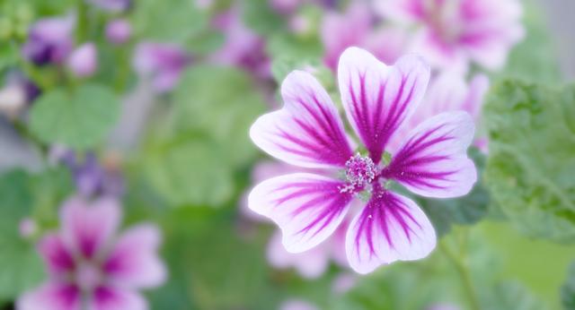 モーブ企画由来の花